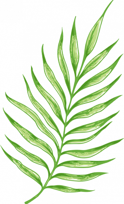 palm_leaf.png